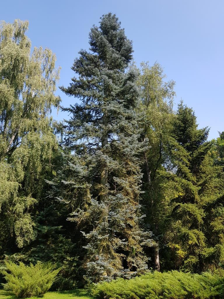 laubbaum repräsentative arten